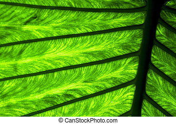 abstract background m veins in the light