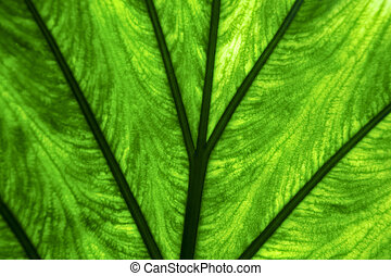 abstract background macro close up of a green