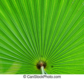Abstract background of a green palm leaf