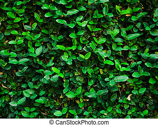 Abstract background of dark green leaves on the wall.