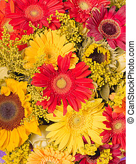 Abstract background of flowers. Close-up