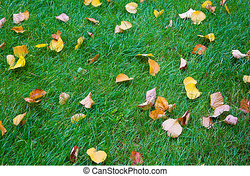 Abstract background of green grass and yellow autumn leaves