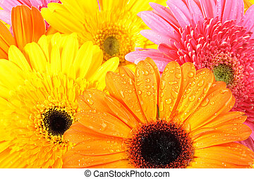 background of pink and orange flowers