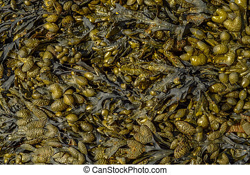 Abstract Background Of Seaweed
