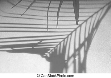 abstract background of shadows palm leaf on concrete rough texture wall. White and Black