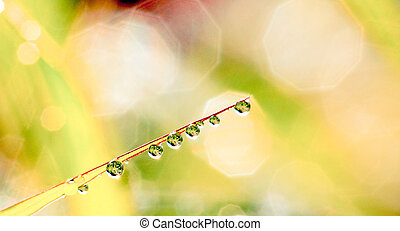 abstract background of water drops on grass defocused with green
