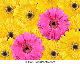 Abstract background of yellow and pink flowers