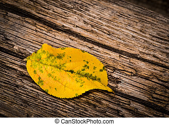 One autumn yellow leaves