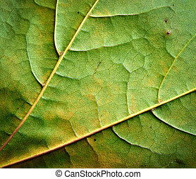 detail of autumn leaves on a tree