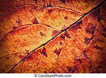 detail of dried autumn leaves tree