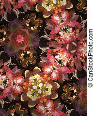 Abstract background in kaleidoscope