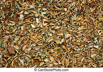 Abstract Background Texture of Fallen Leaves on a Jungle Floor