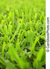 Abstract Background Texture Of Short Cut Grass On A Garden Lawn With Shallow Depth Of Focus