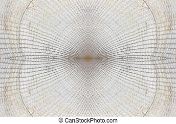 abstract background texture of white seashells