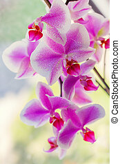 Abstract background with a blooming orchid. Shallow depth of field.