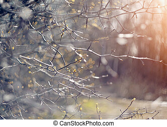 Abstract background with branches of hawthorn