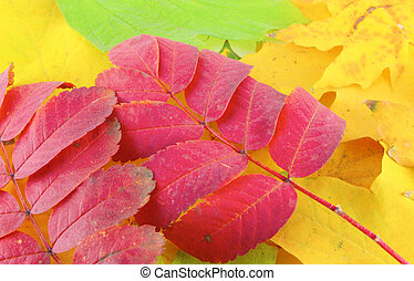 Abstract background with color autumn leaves