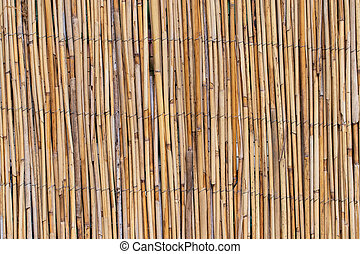 abstract background with reeds, background texture