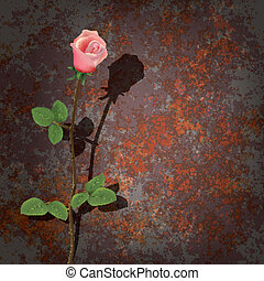 abstract background with rose and rusty metall plate
