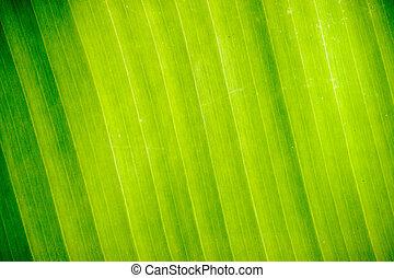 Abstract Banana leaves.