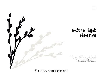 Abstract banner with black pussy willow leaves shadow isolated on white background. Vintage style Presentation template