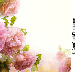abstract Beautiful pink rose floral border background - ...