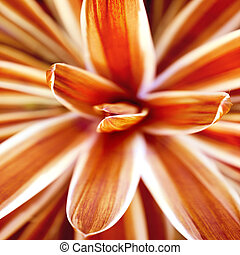 abstract beauty in nature - red flower close-up