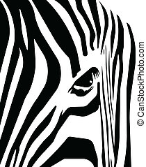 zebra  - Abstract blank and white stripes depicting a zebra