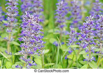 flowers on field