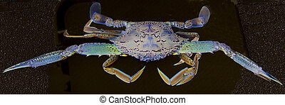 Abstract Blue Crab 3.