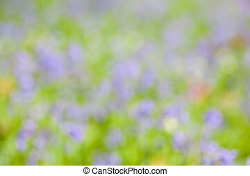 abstract bluebells in the forest