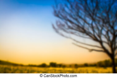 abstract blur and blur effect of dry tree in the field