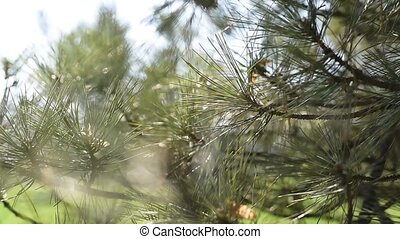 Abstract blurred background of tree in sunny day. - Abstract...