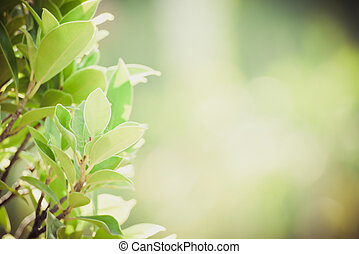 abstract blurred flower background