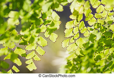 Abstract blurred natural backgrounds with green foliage