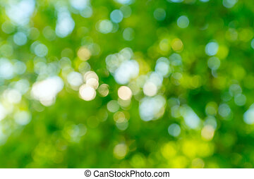 Abstract bokeh background. Defocused tree with green leaves. Summer backdrop