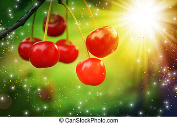 Branch with red cherries