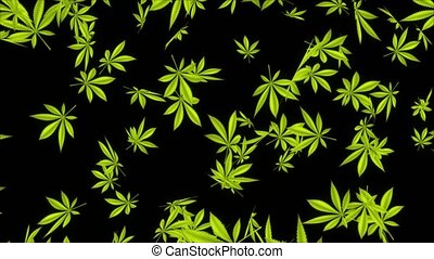 Abstract Cannabis leaves falling Beautiful composition Realistic 3D Alpha channel loop Animation. Marijuana Leaf on green screen. recreational drugs, Marijuana, weed, herb, leaf, ganja, sativa, joints