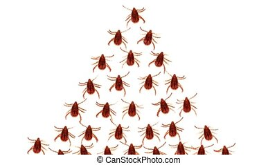 Abstract Clip of Parasitic Ticks Marching in Formation....