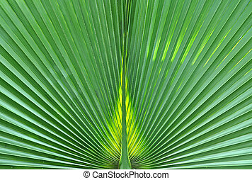 Abstract close-up of a green palm leaf