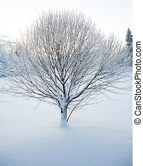 Abstract closeup of a tree in winter