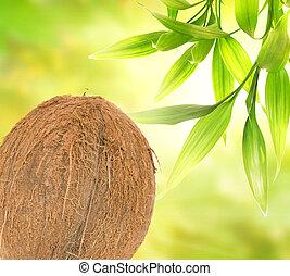 abstract, cocosnoot, groene, op, achtergrond