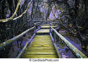 abstract color of wood bridge in hi