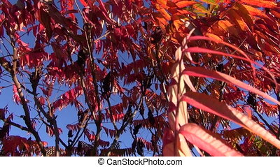 abstract colorful autumn leaves