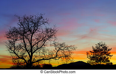 Abstract colorful sunset landscape with tree silhouette