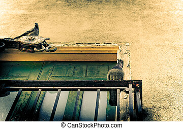Abstract colorful urban detail with pigeons
