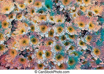 abstract daisy in bloom in spring