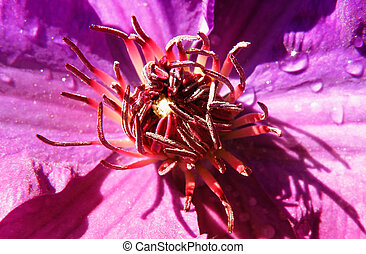 abstract detail of flower