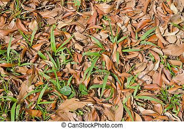 abstract, droog, bladeren, achtergrond, in, natuur