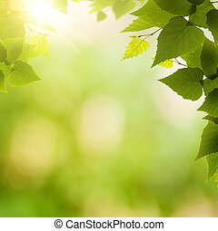 Abstract environmental backgrounds with birch foliage and beauty